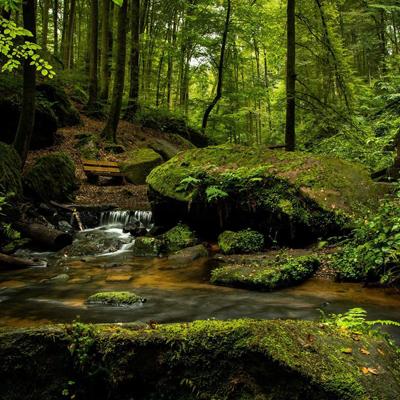 단데농-마운틴-숲